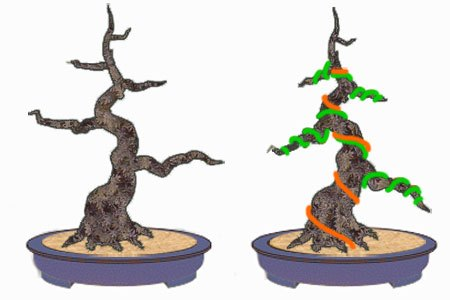 Pleasing How To Wire Bonsai Tree The Right Way Wiring Cloud Staixaidewilluminateatxorg