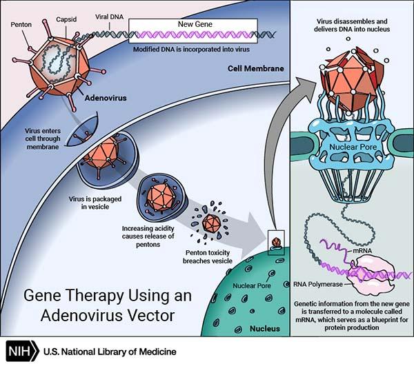 Tremendous Genetics Diagram Genes Dna Standard Electrical Wiring Diagram Wiring Cloud Ittabisraaidewilluminateatxorg