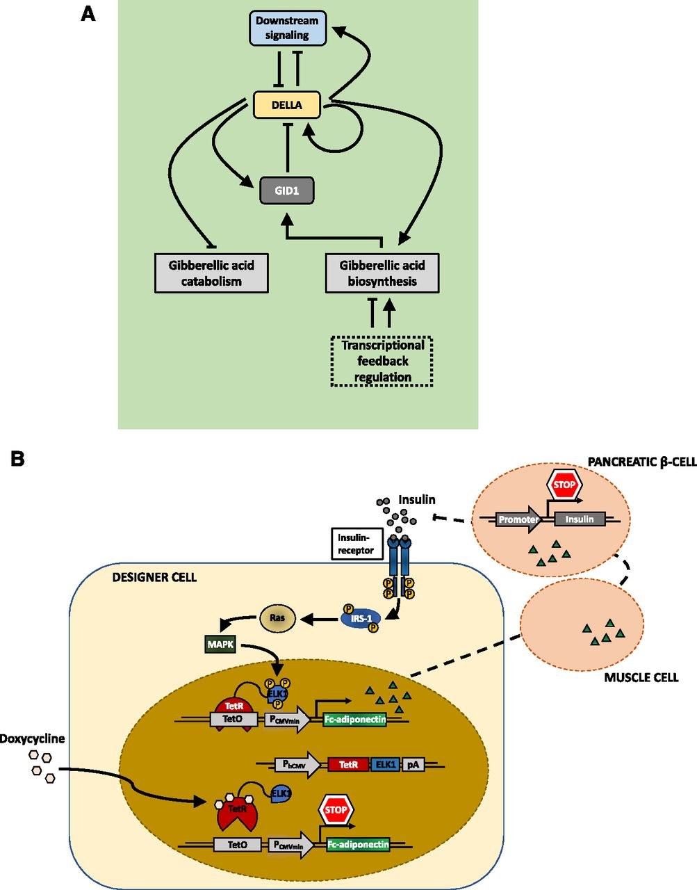 Stupendous Synthetic Switches And Regulatory Circuits In Plants Plant Physiology Wiring Cloud Rometaidewilluminateatxorg