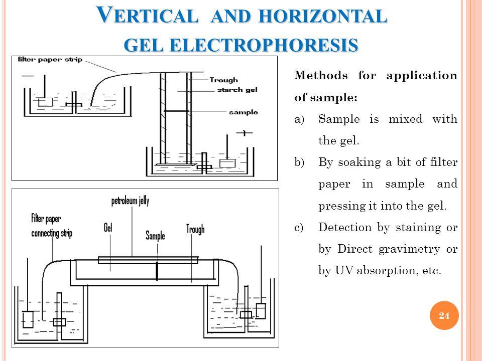 Brilliant The Illustrated Diagram Of Vertical Gel Electrophoresis B The Gel Wiring Cloud Timewinrebemohammedshrineorg
