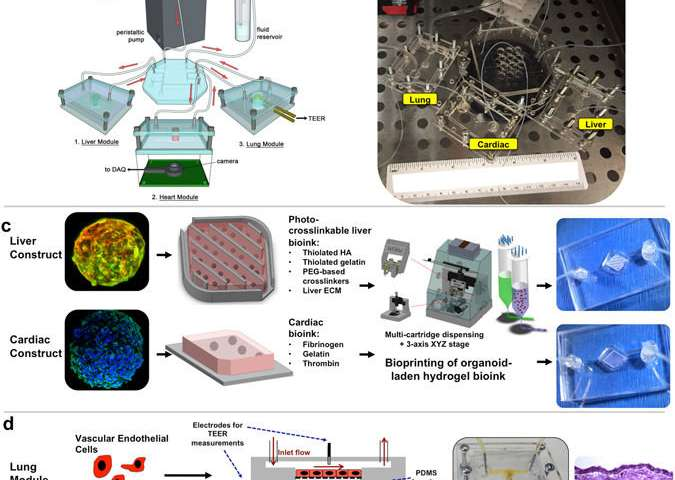Sensational Scientists Develop Body On A Chip System To Accelerate Testing Of Wiring Cloud Orsalboapumohammedshrineorg