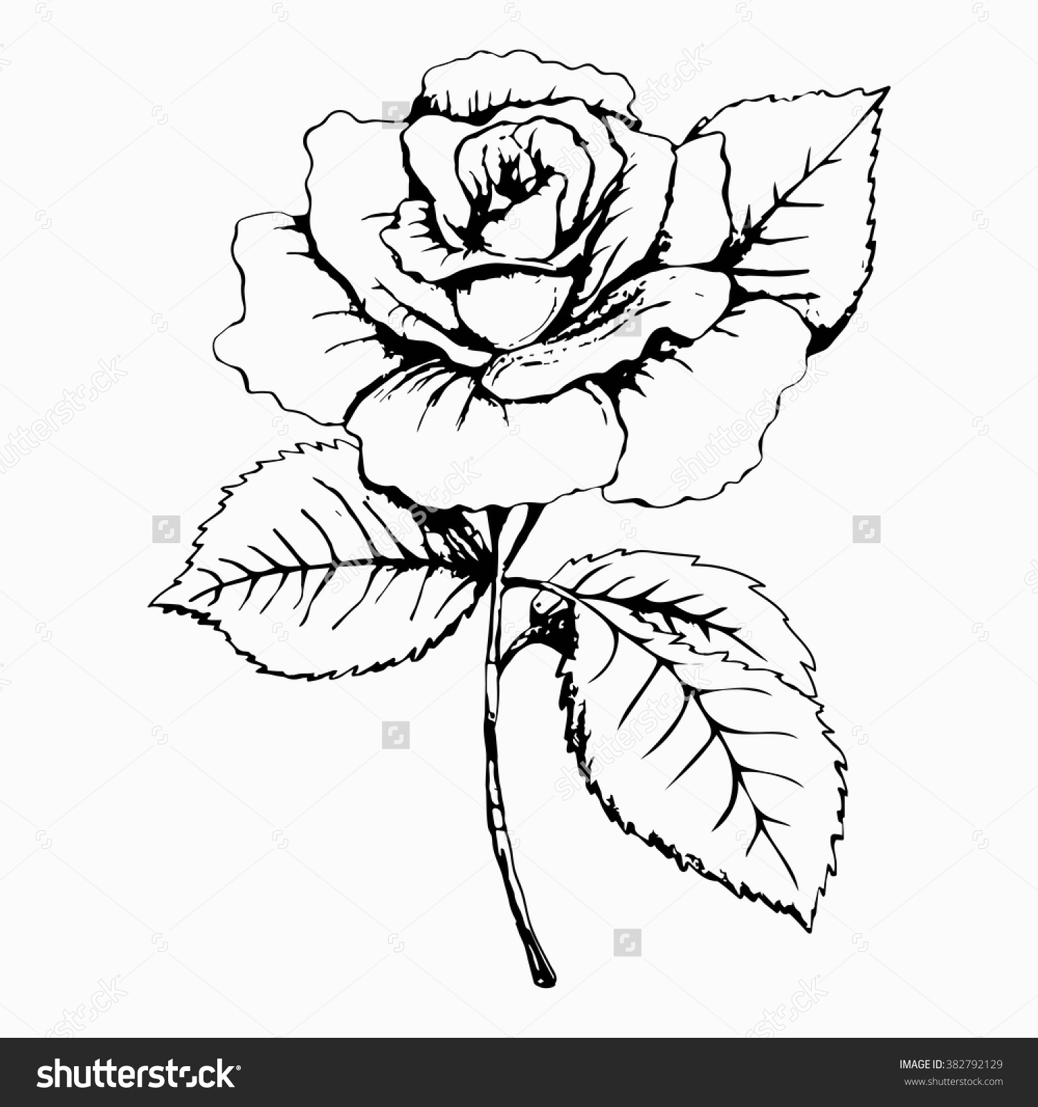 Admirable Flower Rose Sketch Painting Hand Drawing White Bud Petals Auto Wiring Cloud Apomsimijknierdonabenoleattemohammedshrineorg