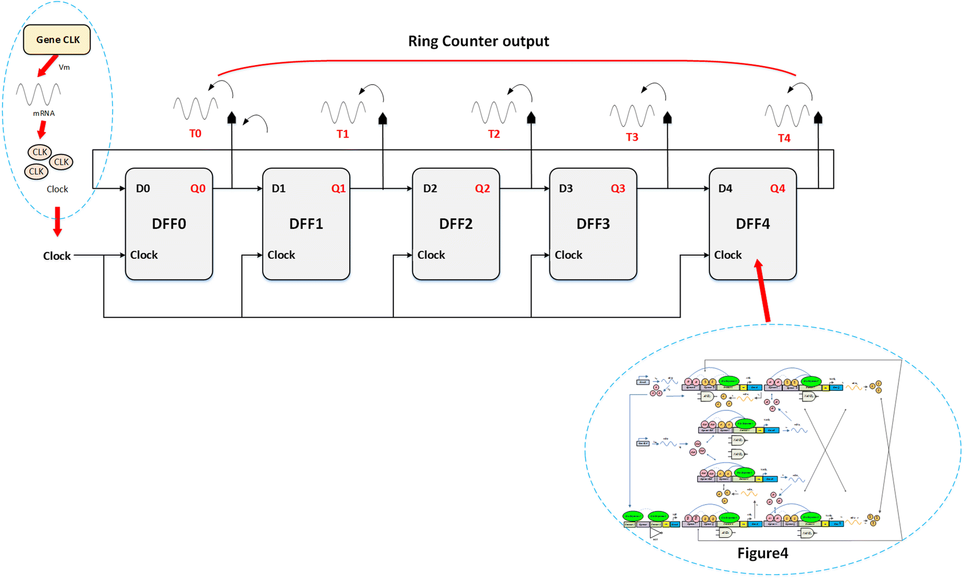Awesome Synthesis Of Control Unit For Future Biocomputer Springerlink Wiring Cloud Rometaidewilluminateatxorg