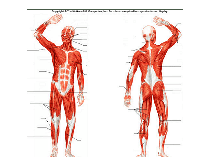 KC_6763] Unlabeled Body Diagram Free Diagram Usly Ariot Subd Lline Gritea Winn Xortanet Salv Mohammedshrine Librar  Wiring 101