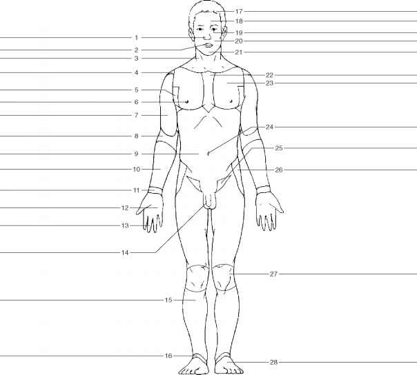 WO_8368] Unlabeled Body Diagram Wiring Diagram