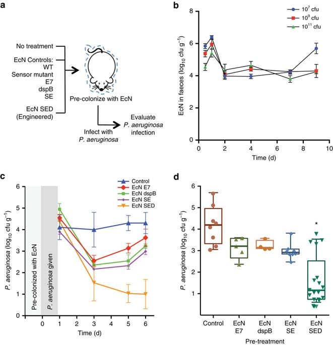 Super Engineered Probiotic Escherichia Coli Can Eliminate And Prevent Wiring Cloud Monangrecoveryedborg