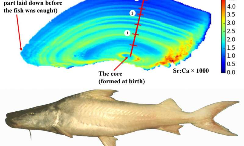 Fantastic Secret Lives Of Amazonian Fishes Revealed By Chemicals Stored In Wiring Cloud Vieworaidewilluminateatxorg