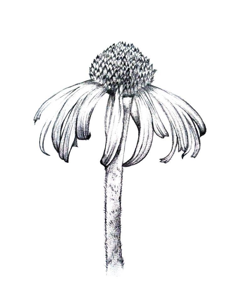 Sensational 1000 Images About Botanical On Pinterest Auto Electrical Wiring Wiring Cloud Rineaidewilluminateatxorg