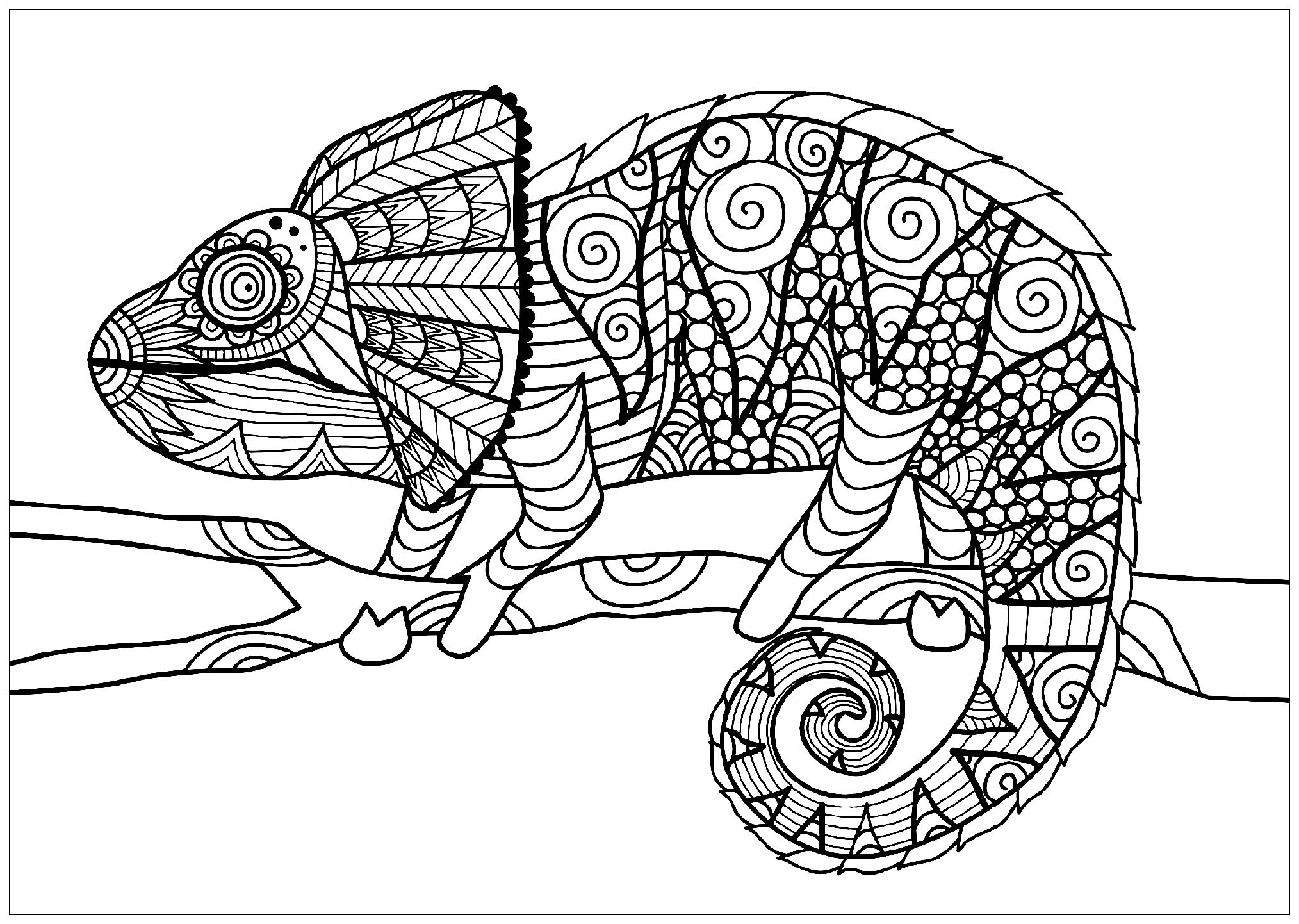 Superb Free Coloring Pages Of Dragon Foot Print Auto Electrical Wiring Wiring Cloud Rineaidewilluminateatxorg