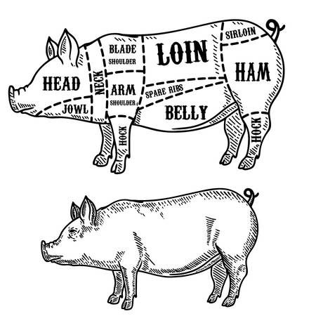 Stupendous Pig Butcher Diagram Pork Cuts Design Element For Poster Card Wiring Cloud Monangrecoveryedborg