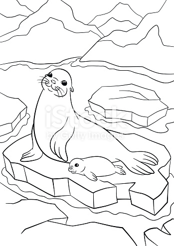 Cute Seal Coloring - Cliparts.co | 494x349